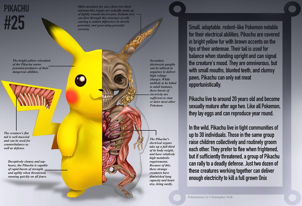 #25 Pikachu - anatomia