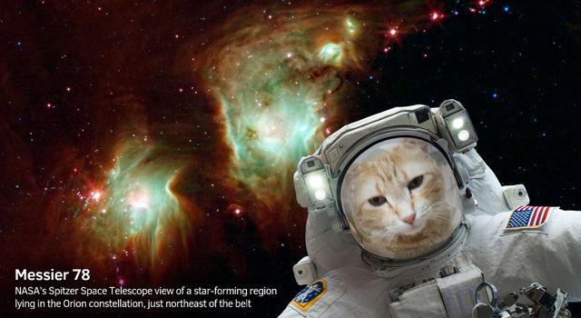 Catsronauta - selfie z aplikacji mobilnej NASA Selfies