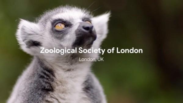 Google Cloud pomaga chronić zagrożone gatunki zwierząt