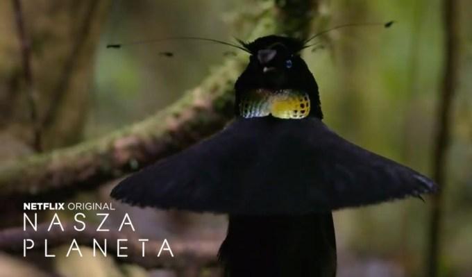 """""""nasza Planeta"""" – serial dokumentalny Netflix"""