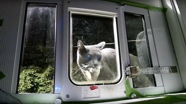 Dzięki tym drzwiczkom kot nie sprowadzi do domu żadnego truchła!
