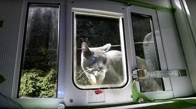 Inteligentne drzwiczki dla kota