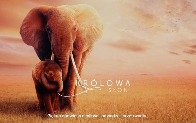 """Zwiastun filmu """"Królowa słoni"""" Apple TV+"""