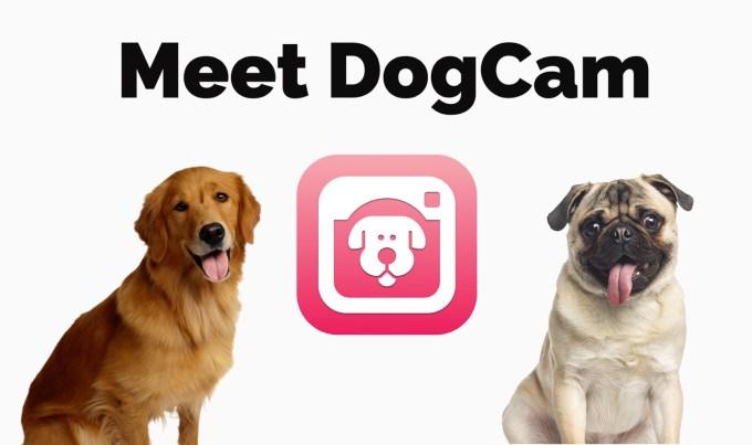 Aplikacja mobilna do robienia sejfie psom: DogCam— Dog Selfie Camera