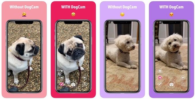 Przykłady zdjęć psów z aplikacją DogCam i bez niej