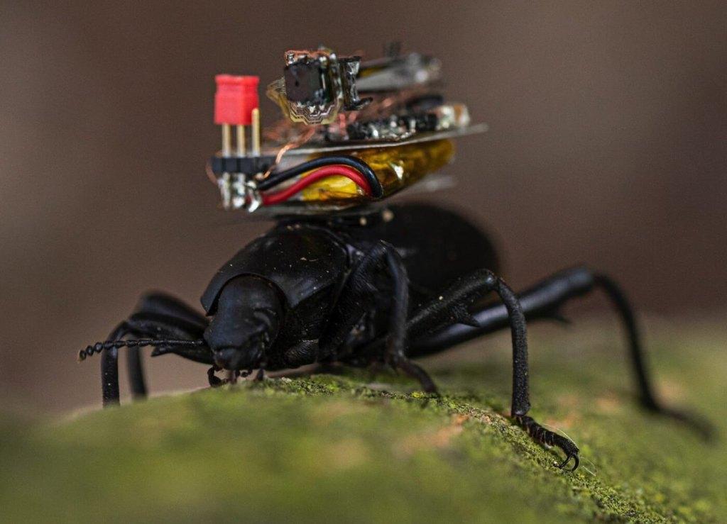 Kamera GoPro dla chrząszczy
