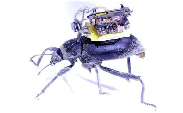Dzięki tej miniaturowej kamerze wiemy, jak chrząszcze widzą świat?!