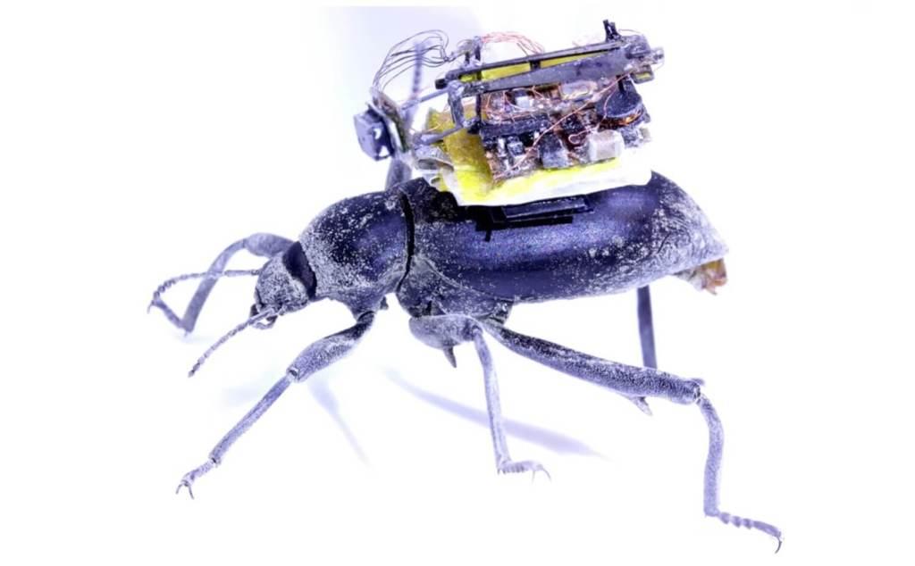 Plecak z kamerą dla chrząszczy