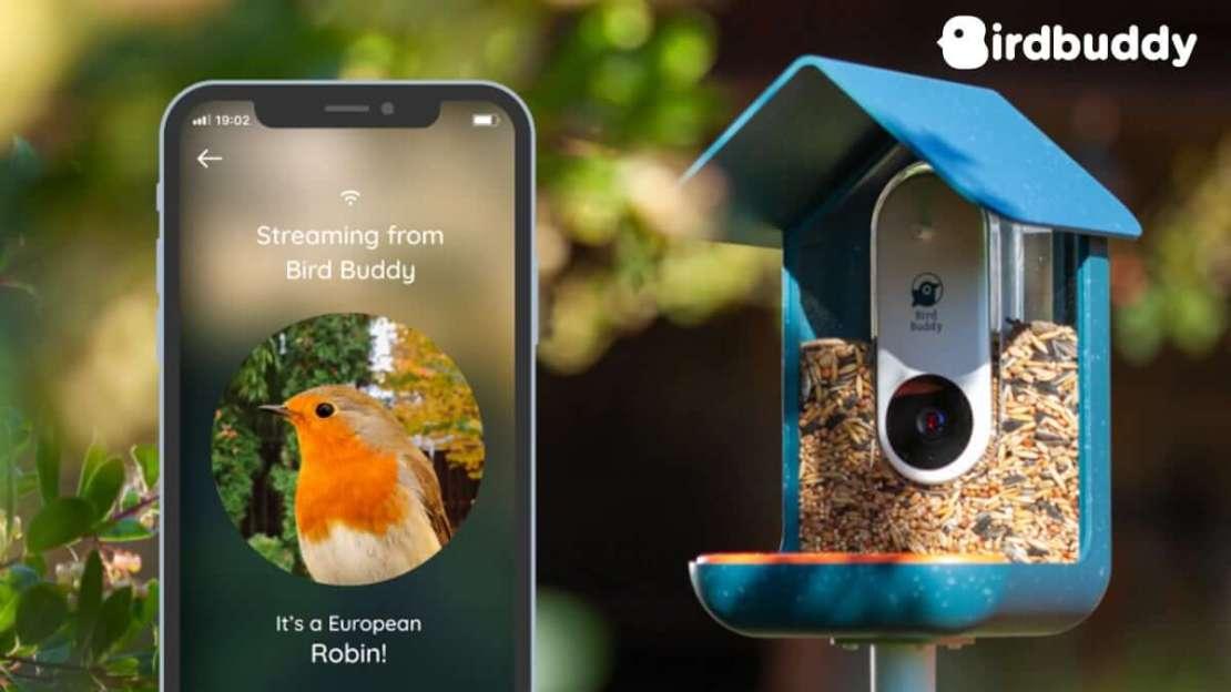Bird Buddy - inteligentny karmnik dla ptaków