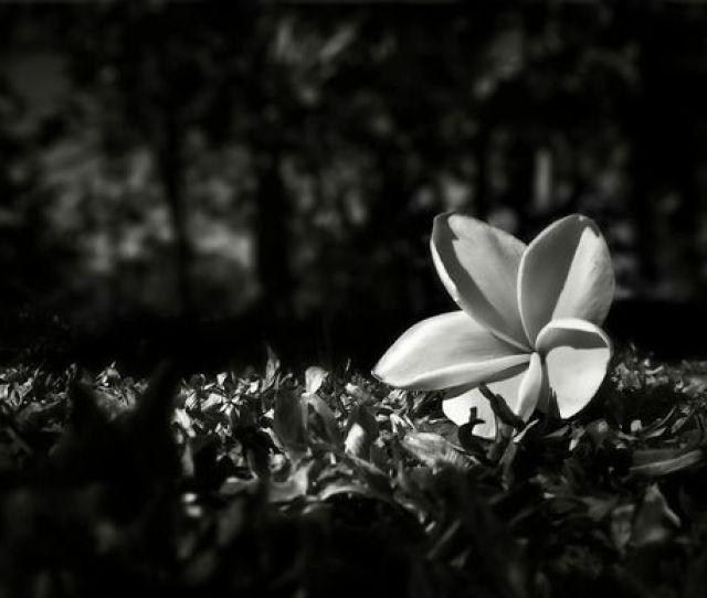 Gugur Bunga