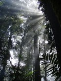 Amanecer en el Bosque Nublado