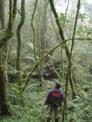 En el Bosque Nublado de Santa Bárbara