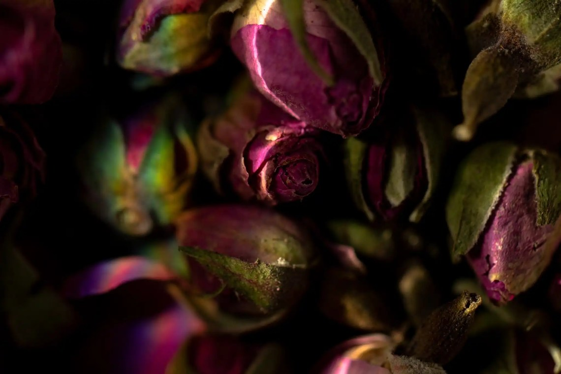 Dried pink rose buds macro