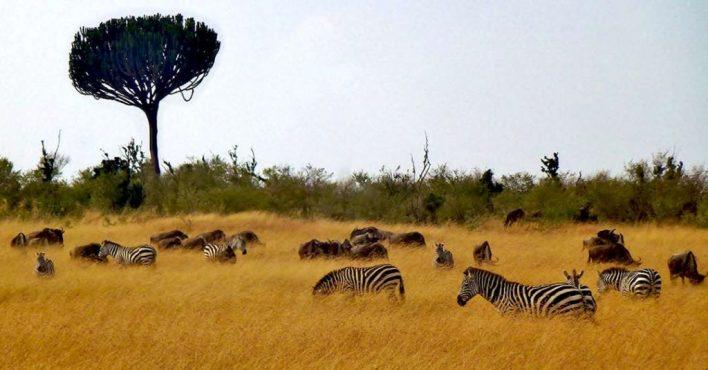 reserva Masai Mara Kenia - Viajar a Africa: Kenia