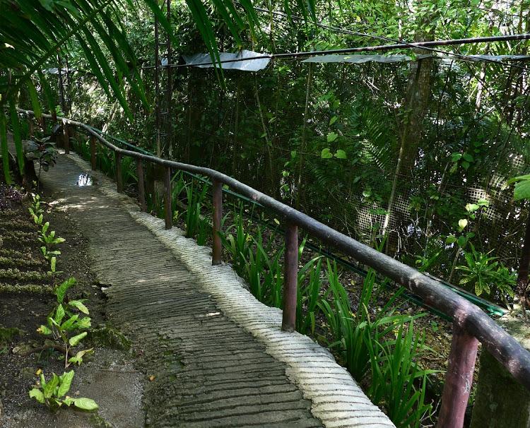Jaula gigante donde los tarseros de bohol en Filipinas residen
