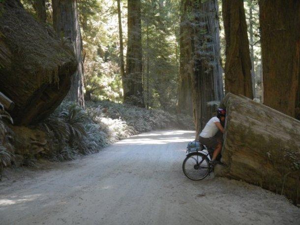 Viajando-full-Redwood