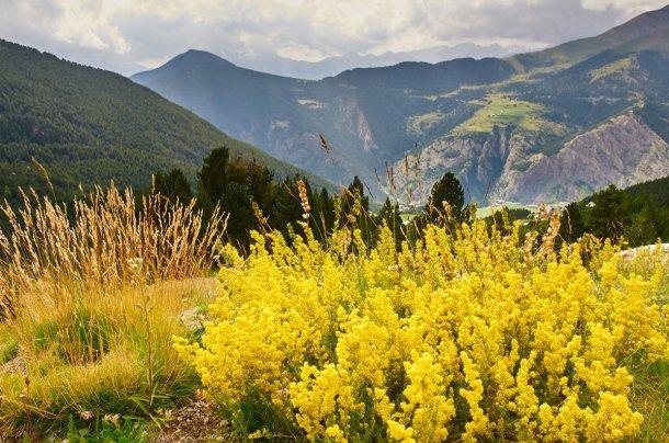 Flora y paisajes de Andorra