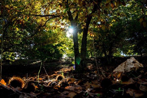 Bosque y sol en la Gran Senda de Málaga