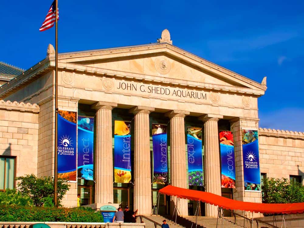 Disfruta de la vida marina y espectáculos acuáticos en el Sheed Aquarium de Chicago