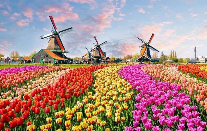 los campos de flores mas hermosos del mundo
