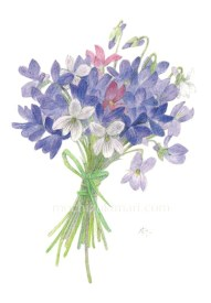 「すみれの花束」 望月麻里(鉛筆、色鉛筆)illustrated by Mari Mochizuki