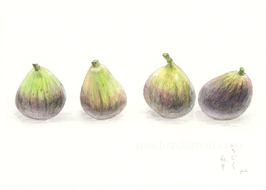 「いちじく」望月麻里(鉛筆、色鉛筆)素材:マットコート紙(ややツヤあり)illustrated by Mari Mochizuki