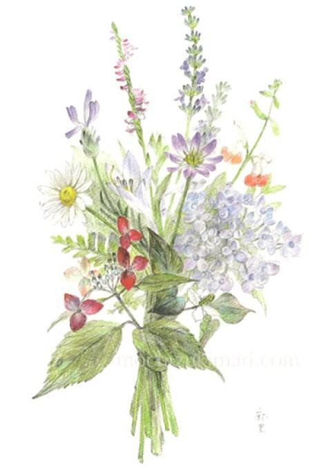 「そよ風・母の庭のブーケ」 望月麻里(鉛筆、色鉛筆)illustrated by Mari Mochizuki (完売)