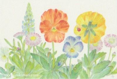 「春・庭にて」望月麻里(鉛筆、色鉛筆)illustrated by Mari Mochizuki