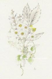 「秋の野山を歩く」望月麻里(鉛筆、色鉛筆)illustrated by Mari Mochizuki