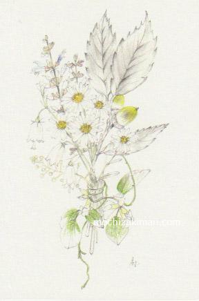 「秋の野山を歩く」望月麻里(鉛筆、色鉛筆)素材:アラベール(画用紙のような質感)illustrated by Mari Mochizuki