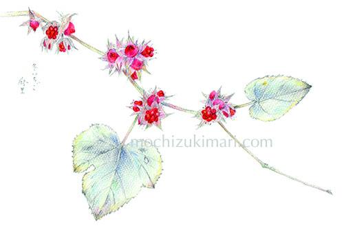 新作「冬いちご」望月麻里(鉛筆、色鉛筆)素材:アラベール(画用紙のような質感)illustrated by Mari Mochizuki
