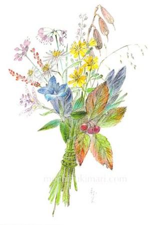 「秋の野を歩く 望月麻里(鉛筆、色鉛筆)illustrated by Mari Mochizuki