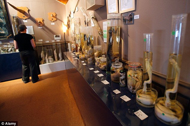 world's most bizarre museums