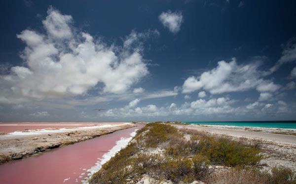 beautiful pink beaches Caribbean