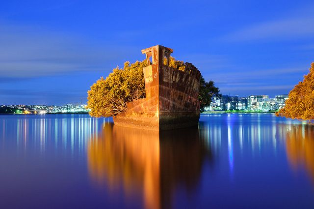 Homebush Bay unusual floating forest