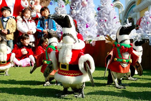 Penguins in Santa suits to welcome Christmas  2