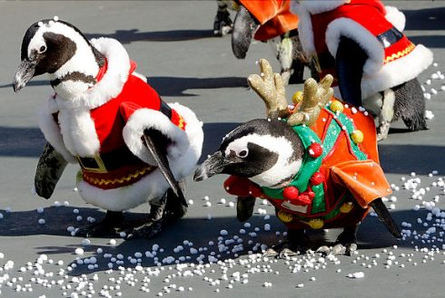 Penguins in Santa suits to welcome Christmas  3