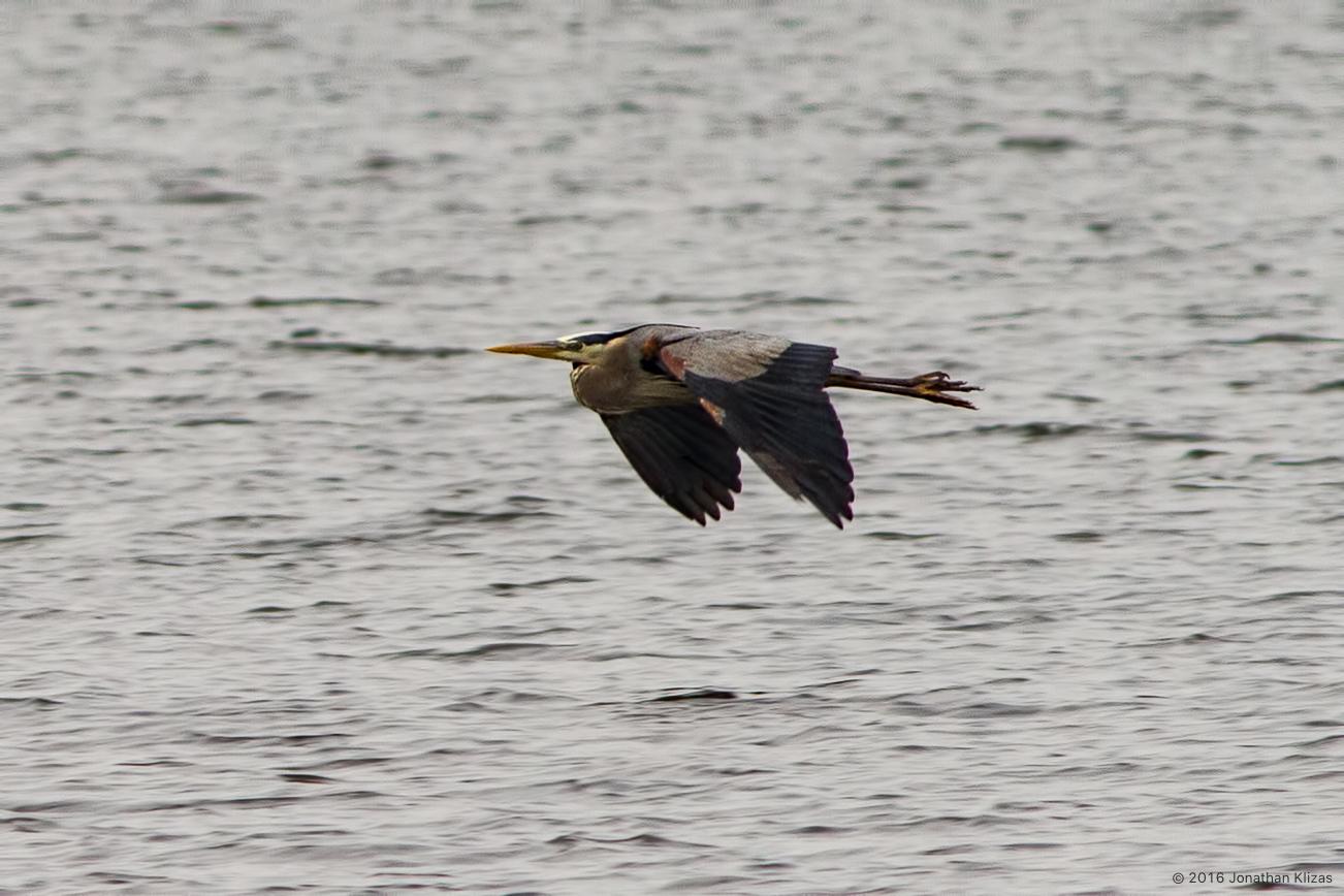 Rain More Rain And Bird Migration May 7