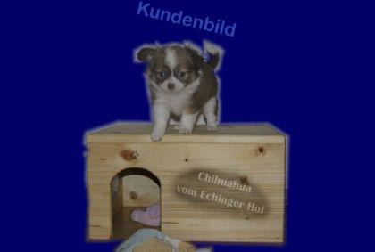 welpenhaus_02_03_echinger-hof