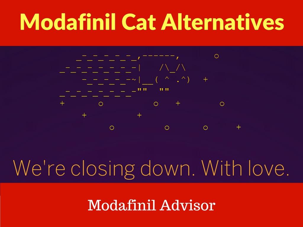 modafinil cat alternative modafinil sources