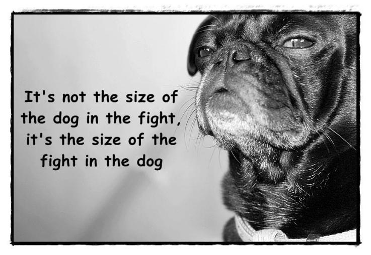 size of the dog in the fight