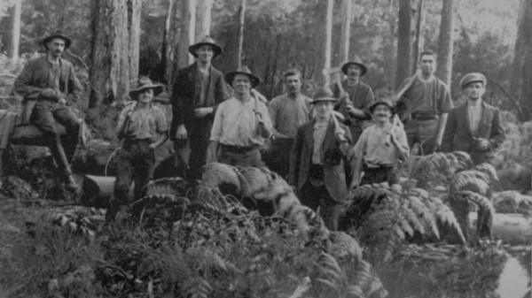 Cypress Pine Foresters