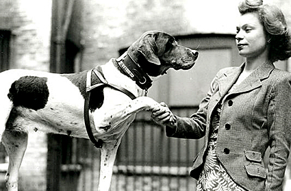 1946: Judy the English pointer who became the only official canine POW of the Second World War