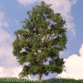 Ein Nussbaum
