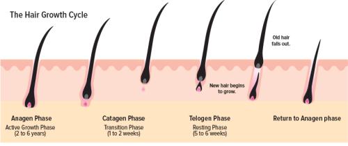 prp fat derived stem cells
