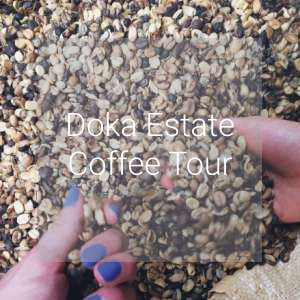 Doka Estate Coffee Tour, Costa Rica