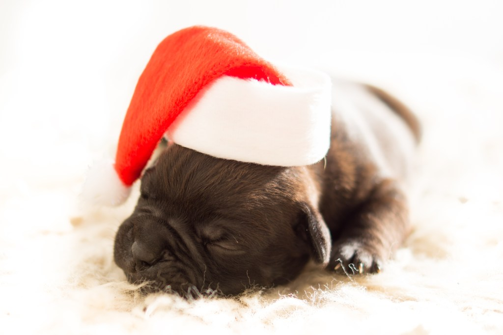 We can all agree on puppies in Santa hats.