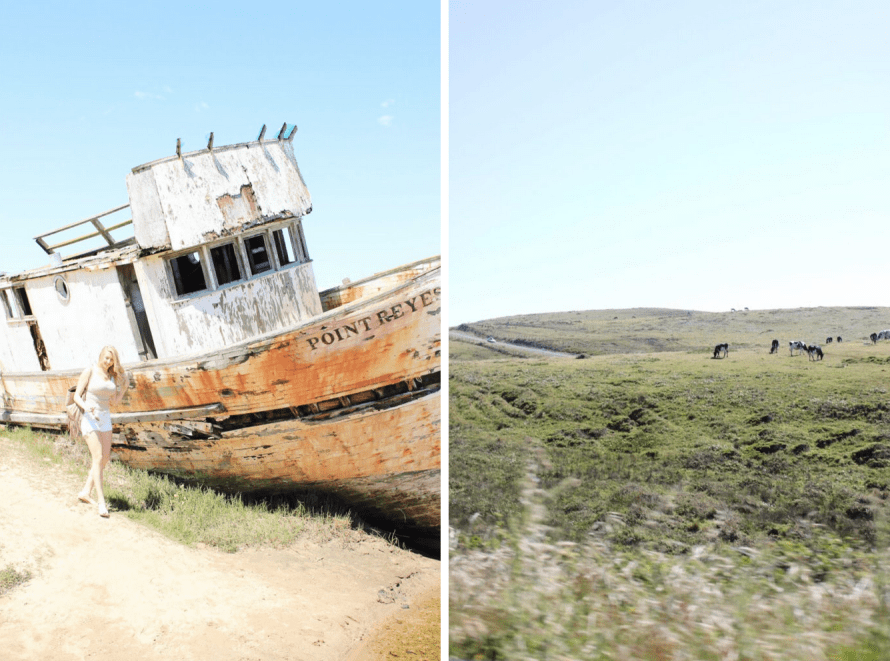 Point Reyes Guide / Modern Daydream Living