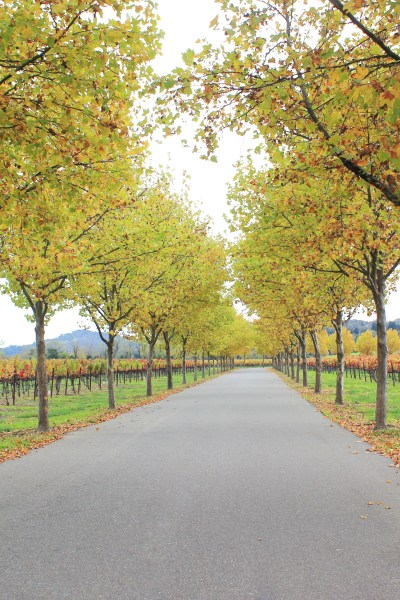 20 Wineries In 2 Days: How To Make The Most Out Of Your Wine Country Trip