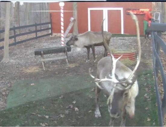 Santa Live Home Cam: Feeding his Reindeer